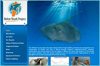 The Wildlife Conservation Society�s Belize Shark Project (BSP) promotes the management and conservation of sharks and rays in Belize through research, capacity-building, outreach, conservation and policy-support. We are based in Belize and work with partners in the private and public sectors, local and foreign academia and non governmental organizations to help strengthen the country�s populations of sharks and rays.