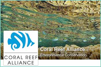 Working with people around the world�from fishermen to government leaders, divers to scientists�we unite communities to save coral reefs.