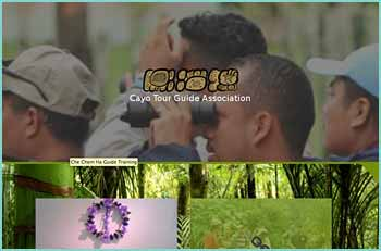 The Cayo Tour Guide Association is a proud and respected body of tour guides that are qualified and certified by Belize's Tourism Board. Founded in 1994 in the beautiful towns of San Ignacio and Santa Elena in western Belize, it is the most active tour guide association in the country. It consists of approximately 180 guides specializing in Mayan archeology, caving, ornithology, river adventures and traditional ethnobotany practices. We are also involved in the community, by protecting our archaeological history, natural formations, flora and fauna. In addition, we also host clean up campaigns around town, highways and rivers and we educate the future of Belize, our school children, when they visit Belize's sites.