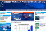 The ECOCEAN Whale Shark Photo-identification Library is a visual database of whale shark (Rhincodon typus) encounters and of individually catalogued whale sharks. The library is maintained and used by marine biologists to collect and analyse whale shark encounter data to learn more about these amazing creatures. The Library uses photographs of the skin patterning behind the gills of each shark and any scars to distinguish between individual animals. Cutting-edge software supports rapid identification using pattern recognition and photo management tools. You too can assist with whale shark research - by submitting photos and sighting information. The information you submit will be used in mark-recapture studies to help with the global conservation of this threatened species.